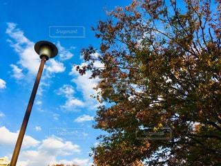 秋の日の写真・画像素材[1631780]
