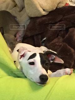 犬の写真・画像素材[501836]