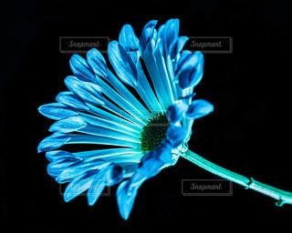 花,青,光,プレゼント,ポストカード,贈り物,ブルー,発光