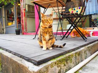 建物の上に座っている猫の写真・画像素材[1274688]