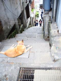犬,階段,後ろ姿