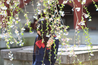 桜の写真・画像素材[510602]