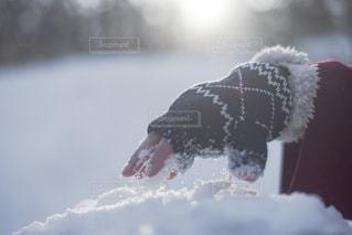 雪の光の写真・画像素材[1802925]