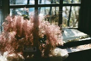 カフェ,自然,花,木,部屋,窓,ドライフラワー,光,フィルム,フィルムカメラ,フィルム写真,フィルムフォト