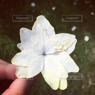 花の写真・画像素材[550444]