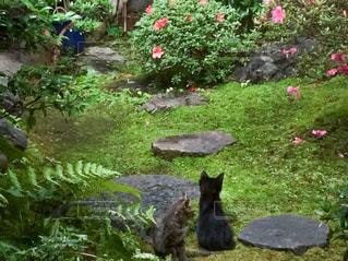 猫,庭,京都,中庭,庭園,子猫,ツーショット