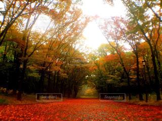 秋雨に落ちるの写真・画像素材[815217]