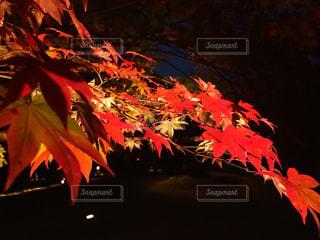 黒と赤のコントラスト - No.841853