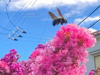 ピンクの花、澄んだ青い空 - No.845144