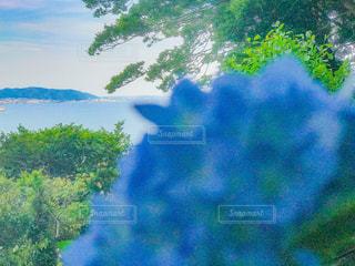 もうちょい先に夏の写真・画像素材[1226116]