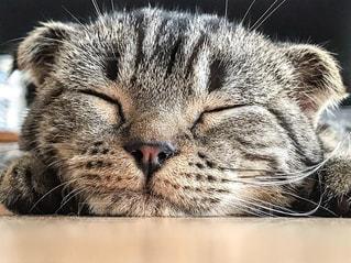 よく寝るね!の写真・画像素材[1269591]