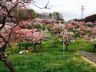 春の写真・画像素材[426978]