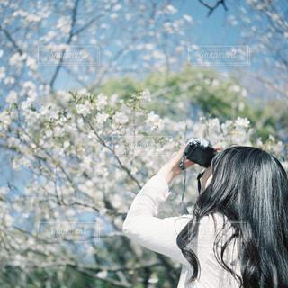 春 - No.403502