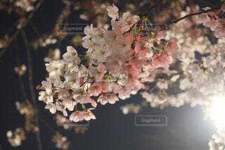 春の写真・画像素材[413828]