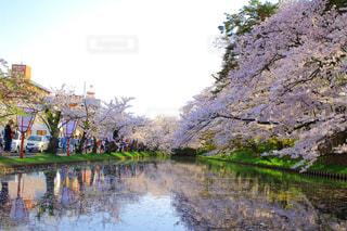 春の写真・画像素材[404297]