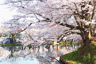春の写真・画像素材[404403]
