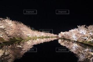 夜桜の写真・画像素材[808328]