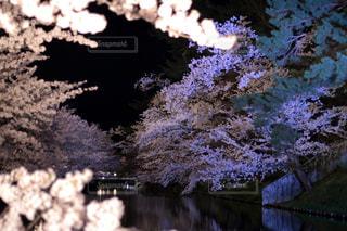 森を流れる川の写真・画像素材[1156557]