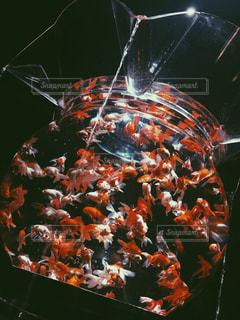 art aquarium - No.771994