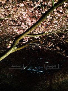 公園の写真・画像素材[403197]