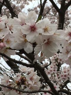 花の写真・画像素材[423423]