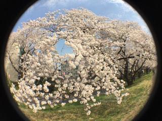 近くの花のアップの写真・画像素材[1122121]