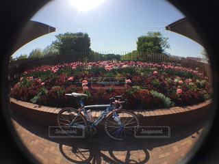 ヤシの木の前で自転車の写真・画像素材[1139442]