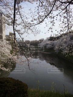 花の写真・画像素材[406479]