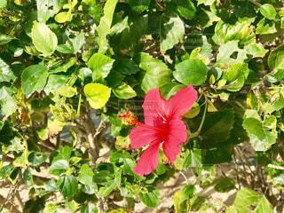 花の写真・画像素材[532449]