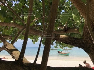 水の体の横にあるツリー - No.1202235