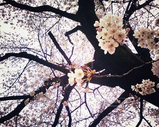 春の写真・画像素材[417554]