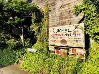 新緑カフェの写真・画像素材[1166560]