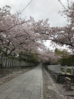 #向日神社,#京都府