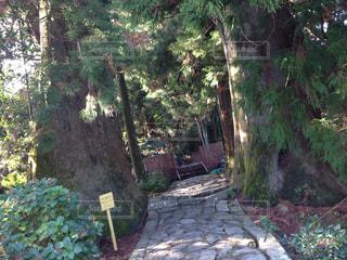 自然,ハート,熊野古道,夫婦杉