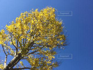 近くの木のアップの写真・画像素材[874574]
