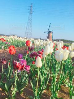 色とりどりの花のグループの写真・画像素材[1131787]