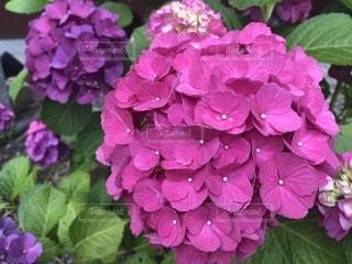 近くの花のアップの写真・画像素材[1248376]