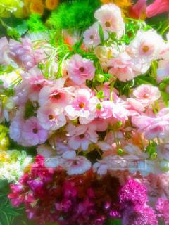 近くの花のアップの写真・画像素材[1827303]