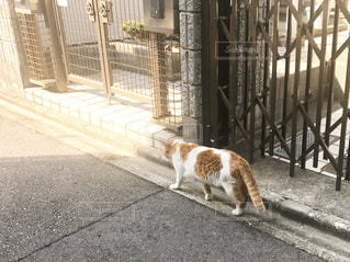 猫,名古屋,愛知県,名古屋市,愛知,名古屋市千種区,千種区,千種