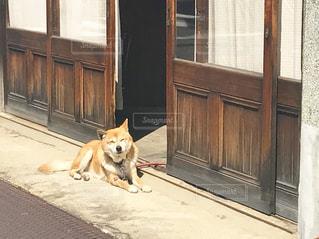 犬,名古屋,愛知県,名古屋市,愛知,名古屋市千種区,千種区,千種