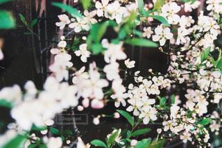 近くのフラワー ガーデンの写真・画像素材[1237256]