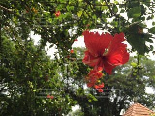 花の写真・画像素材[525938]