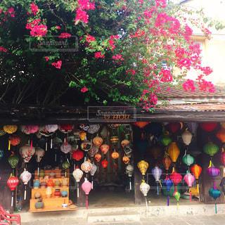 花,ピンク,ベトナム,ホイアン,ブーゲンビリア