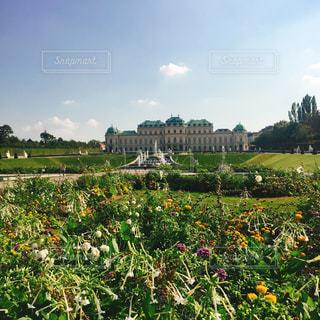 花,庭園,オーストリア,ウィーン,海外旅行,ガーデン,クリムト,ヴェルベデーレ宮殿