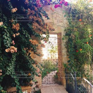 花,庭園,イタリア,海外旅行,マルタ島,ガーデン,ナシャール,小さなヴェルサイユ宮殿