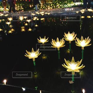 花,夜,フラワー,黄色,水面,光,イルミネーション,キラキラ,イエロー,電飾,あしかがフラワーパーク,きいろ,ハスの花,yellow