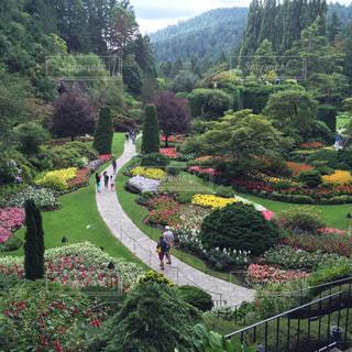 花,海外,庭園,カナダ,海外旅行,ヴィクトリア,ガーデン,ブッチャートガーデン,サンクンガーデン