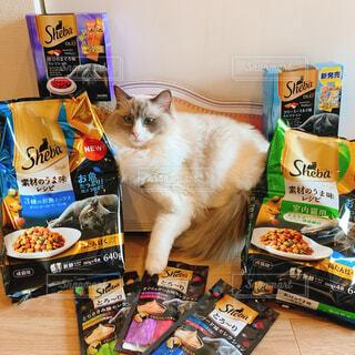 テーブルの上に座っている猫の写真・画像素材[4227059]