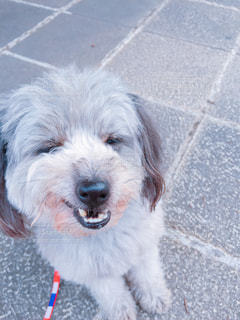 犬,散歩,スマイル,笑顔,マルチーズ,愛犬,ハッピー,お散歩,爆笑,わんちゃん,日産スタジアム