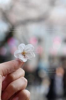 春の写真・画像素材[409576]